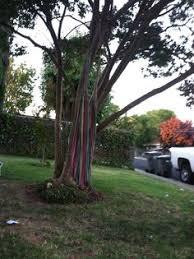 fleming s nurseries top ten trees backyard ideas