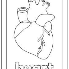 dltk heart coloring kids drawing coloring pages marisa