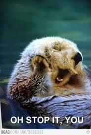 Stop It You Meme - oh stop it you otter meme memes to make me lol pinterest