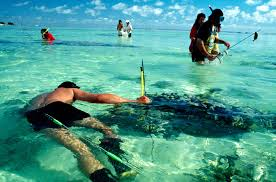 in search of the cook islands new zealand geographic