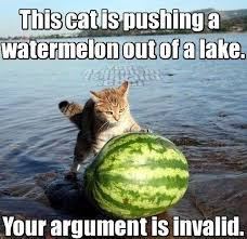 Watermelon Meme - this cat is pushing a watermelon out of a lake your argument is