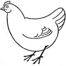 draw chickens u0026 hens easy step step drawing