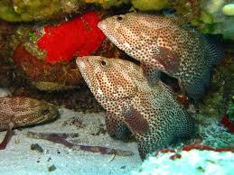 free images sea water nature ocean animal diving wildlife