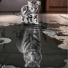 cat and tiger diy 5d diamond embroidery painting cross stitch home