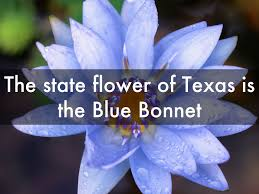 texas by ijhostetler23
