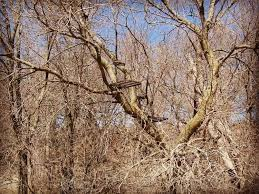 dnr warns against deer stand in ash trees news great country
