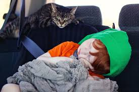 8 tips to prepare cats for car travel