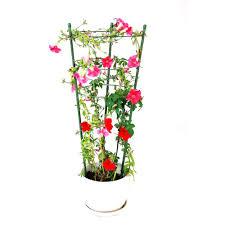 small plant supports small plant supports 28 images barrington small obelisk plant