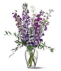 delphinium flowers delphinium dreams blue and purple delphinium from you flowers