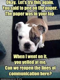 cute-puppy-pictures-pee-paper