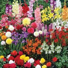 summer bulbs collection other flower bulbs meuwen