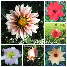 Types Of Garden Flowers Different Types Of Flowers All Types Of Flowers Can Be Placed