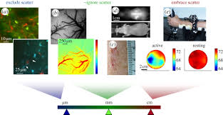review optical imaging for biomedical research philosophical