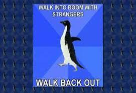 Socially Awkward Penguin Memes - origins of socially awkward penguin meme video ebaum s world