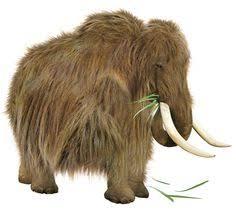 woolly mammoth close relative canvas print canvas art