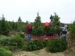 tree wholesaler canada international superior