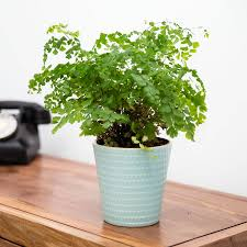 Planter Pot Geometric Ceramic Planter Plant Pot In Mint Green By Stupid Egg