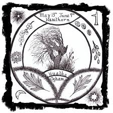 the ogham trees the magic of hawthorn huathe