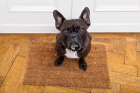 the most annoying dog behaviors and how you can fix them