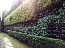 green wall garden malaysia amazing living wall of greenery