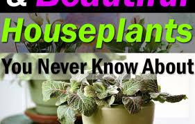 plant garden dreams ornamental plants stunning hearty house