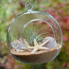 mini beach terrarium air plant decor