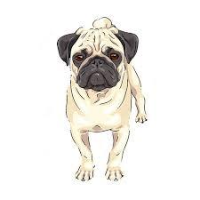 pug drawing pugs not drugs pics of pugs