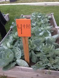 san antonio elementary embraces farm to food