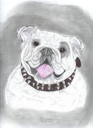 sketches for english bulldog sketches www sketchesxo com
