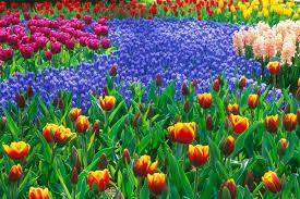 Spring Flower Garden Beautiful Flower Garden Wallpaper Forest Beautiful Flower Garden