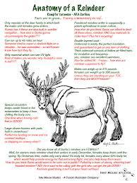 funny reindeer humor