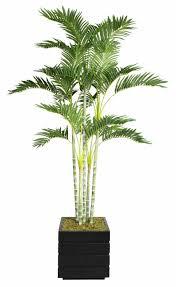 tall potted plants png darxxidecom