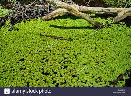 native plants in the amazon rainforest amazon rainforest plants stock photos u0026 amazon rainforest plants