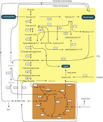 kennedy compound floor plan changes in transcript abundance in chlamydomonas reinhardtii