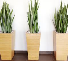 indoor modern planters plants used for aesthetics benefits interior decoration indoor