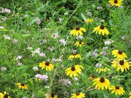 native plant landscaping ideas wildflower gardening how to use wildflowers and native plants