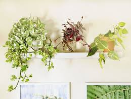 indoor plant 18 most beautiful indoor plants 5 easy care tips a piece of
