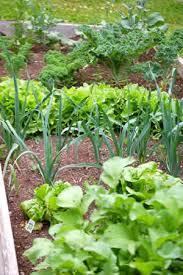 Us Zones For Gardening - garden planting dates for nj zone 6 nj gardening tips raised