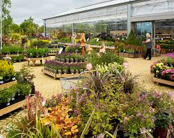 plants rosebourne
