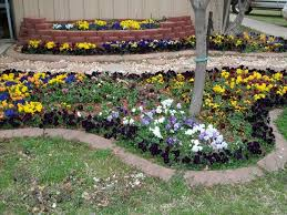 fall flower bed roundup parks brothers greenhouses