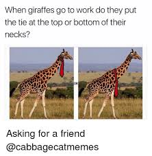 Giraffe Hat Meme - when giraffes go to work do they put the tie at the top or bottom