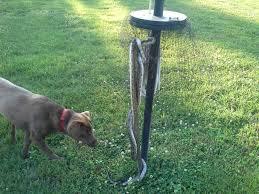 How To Avoid Snakes In Backyard Snakgard