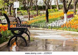 Benches In Park - an empty park bench in the floral english gardens in the