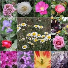 pictures of flower names search flower posts