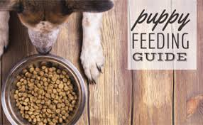 how much food should i feed my puppy caninejournal com