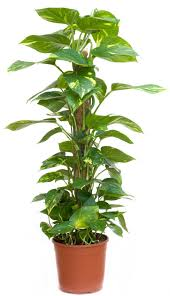 Plants To Keep In Bathroom 4 Powerful Air Purifying Plants To Clean The Air In Your Home