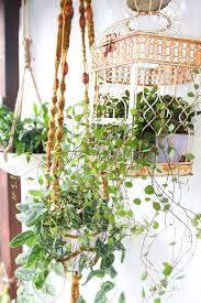 livingroom types of indoor plants hanging house plants large