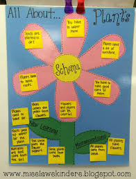 Life Cycle Of A Flowering Plant - miss law u0027s kinders plant life cycles unit day 1