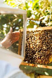 backyard beekeeping airbnb