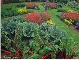 ornamental edibles for the warm season the real dirt anr